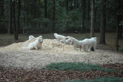 The sand pile was the central hangout for much of the pyr play.